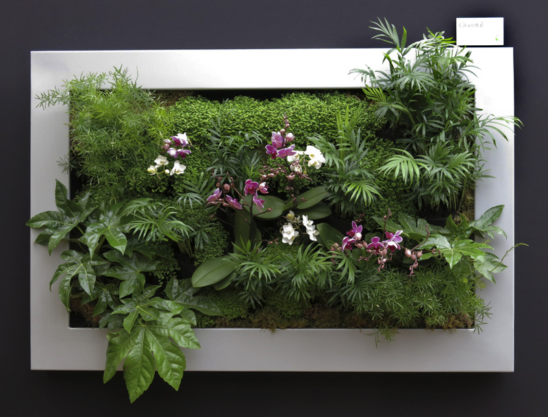 trend for vertical planting continues at chelsea flower. Black Bedroom Furniture Sets. Home Design Ideas