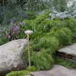 Trailfinders Australian Garden Acacia Cognata Limelight